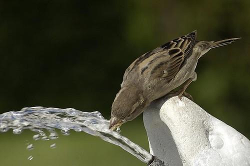 339140 jardim passaro agua Descubra como atrair pássaros para o seu jardim