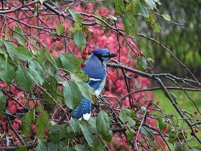 339140 passaro arquivo ybs 2006 Descubra como atrair pássaros para o seu jardim