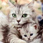 349572 2622 150x150 Os gatinhos mais fofos do mundo