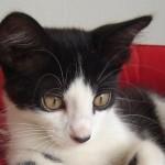 349572 DSC03222 150x150 Os gatinhos mais fofos do mundo