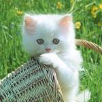 349572 Papel de Parede   Gatinhos 02 1024 x 768 JPEG 150x150 Os gatinhos mais fofos do mundo