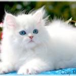 349572 e422d4ee88a4b85da83e8fcdbd9e64d9 150x150 Os gatinhos mais fofos do mundo