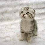 349572 fotos de gato 43 150x150 Os gatinhos mais fofos do mundo