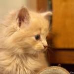 349572 fotos de gato 59 150x150 Os gatinhos mais fofos do mundo