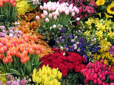349762 flores Flores mais belas da natureza