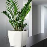 349859 Plantas para banheiro Zamiokulkas 150x150 Plantas para banheiro