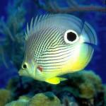 350019 Peixe mais exotico1 150x150 Os peixes mais exóticos do mundo