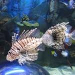 350019 Peixe mais exotico2 150x150 Os peixes mais exóticos do mundo