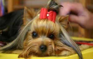 Os cachorrinhos mais fofos do mundo