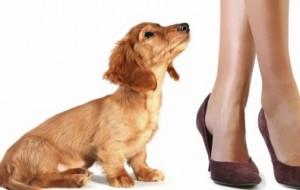 Por que os cachorros se esfregam nas pernas das pessoas?