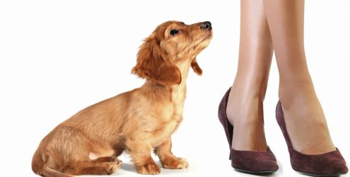 352397 mania cao esfregar perna visita 11574 Por que os cachorros se esfregam nas pernas das pessoas?