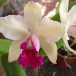 356846 Flor Orquidea 150x150 As orquídeas mais bonitas da natureza