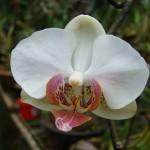 356846 flores098ce3 150x150 As orquídeas mais bonitas da natureza