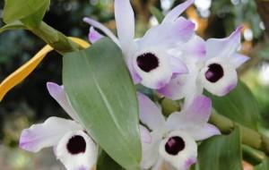 As-Orquídeas-mais-bonitas-da-natureza2