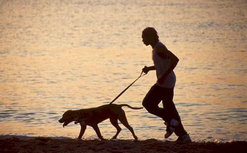 366067 cachorro correndo Prepare o cão para o primeiro passeio