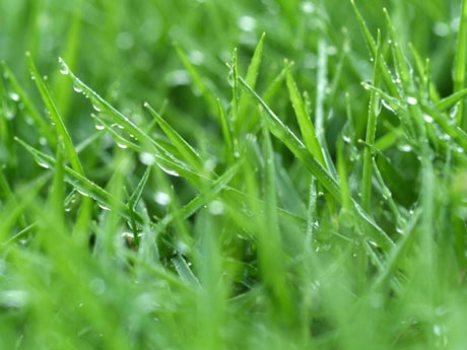 369668 Dicas para ter um gramado verde Dicas para ter um gramado verde