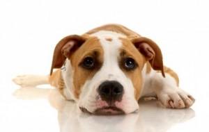 Como acabar com o mau hálito dos cães
