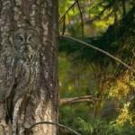 371966 é incrivel a percepção dos animais 150x150 Animais que se camuflam na natureza: fotos