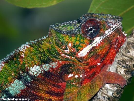 371966 as cores fortes e o colorido servem tamb%C3%A9m para a comunica%C3%A7%C3%A3o al%C3%A9 de se camuflar Animais que se camuflam na natureza: fotos