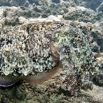 371966 disfarce perfeito quase imperseptivel 150x150 Animais que se camuflam na natureza: fotos