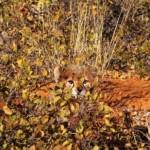 371966 na hora de caçar a camuflagem é de suma importancia 150x150 Animais que se camuflam na natureza: fotos