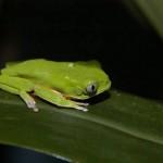 371966 os anfibios tem sua importancia na naturesa 150x150 Animais que se camuflam na natureza: fotos