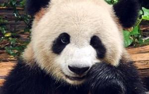 animais mais fofos do planeta
