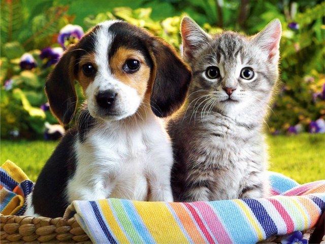 373124 lindos meigos e peludos Os animais mais fofos do mundo: fotos