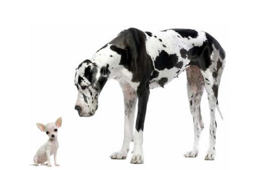 374760 cachorro grande1 Dicas para dar banhos em cães