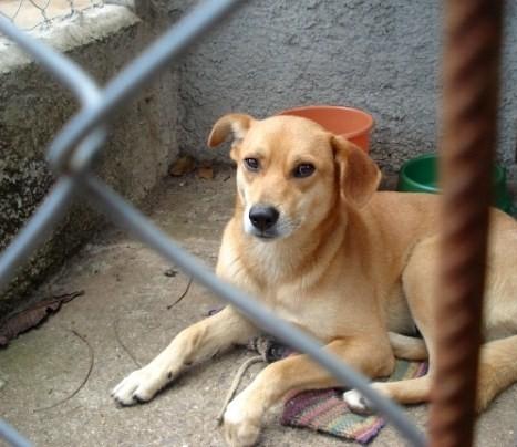 376162 leishmaniose canina 60 433 Leishmaniose: sintomas, causas, tratamento