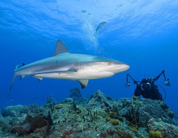 380688 tubarao+fotografo+shark filming Tubarão touro: fotos