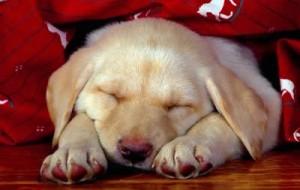 Cães compulsivos: como tratar