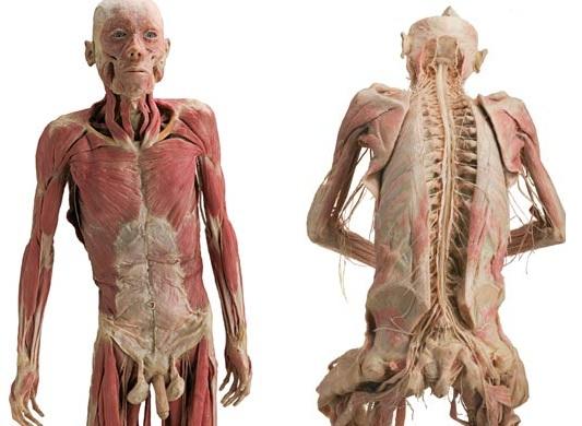 389710 15 Anatomia humana   Fotos