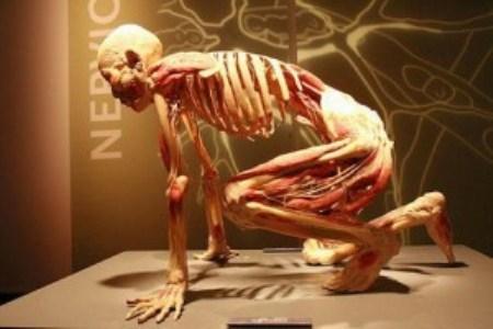 389749 1 Corpo humano – Fotos