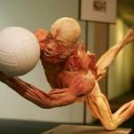 389749 17 150x150 Corpo humano – Fotos