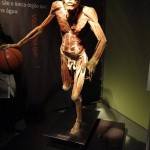 389749 5 150x150 Corpo humano – Fotos