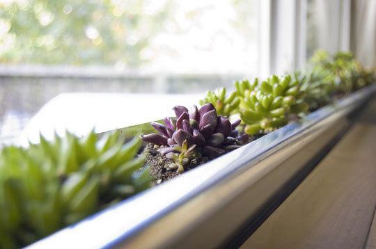 389875 apartment therapy windowsill garden ead living Jardim em apartamento   Fotos, dicas