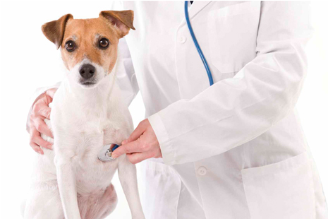 39151 veterinario gratuito clinica veterinária gratis Veterinário Gratuito: Clínica Veterinária Grátis