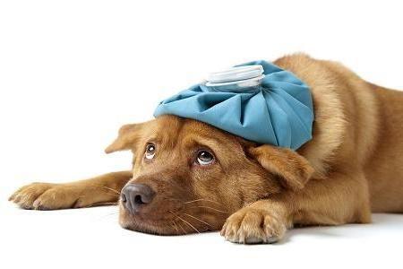 39151 veterinario gratuito clinica veterinária gratis2 Veterinário Gratuito: Clínica Veterinária Grátis