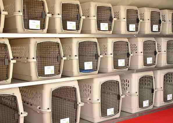 392954 caixas e varios tamnahos para transportar adequadamente cada animal Como transportar animais de estimação em ônibus