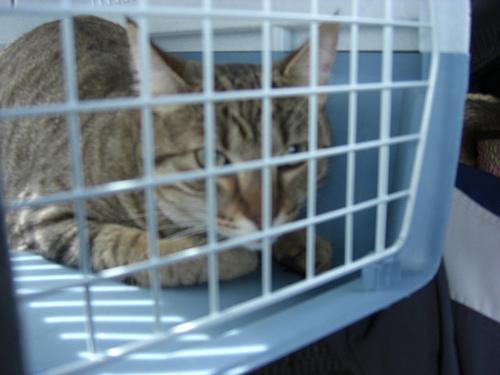 392954 existem regras especificas para o transporte de animais domesticos nos onibus Como transportar animais de estimação em ônibus