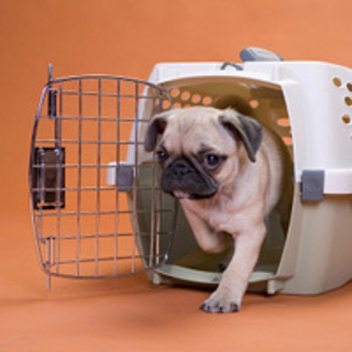 392954 recip%C3%ADente adequado no transporte faz animal feliz Como transportar animais de estimação em ônibus