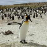 394175 Ilhas Malvinas – Fotos roteiro de viagem 2 150x150 Ilhas Maldivas   Fotos, roteiro de viagem