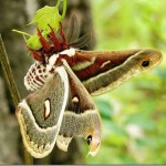 395104 08 thumb 150x150 O mundo dos insetos: fotos