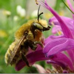 395104 27 thumb 150x150 O mundo dos insetos: fotos