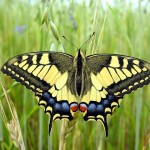 395104 3165  DSCN2321 150x150 O mundo dos insetos: fotos