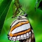 395104 Borboletas 150x150 O mundo dos insetos: fotos