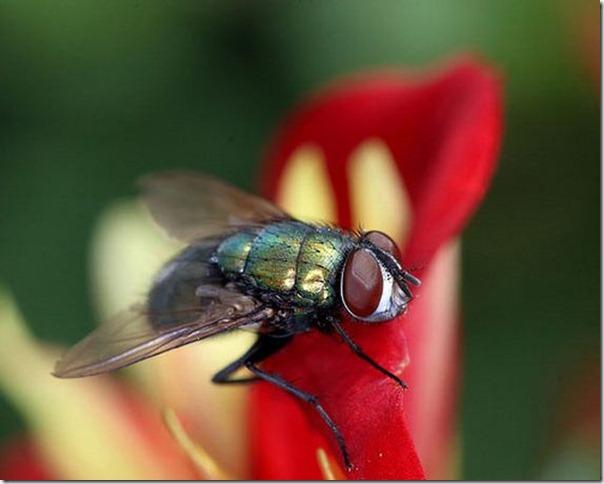 395104 mosca tb O mundo dos insetos: fotos