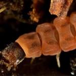 395104 uma larva de besouro 150x150 O mundo dos insetos: fotos