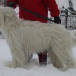 396039 Ovtcharka do Sul da Rússia1 150x150 Cães de raças raras: fotos